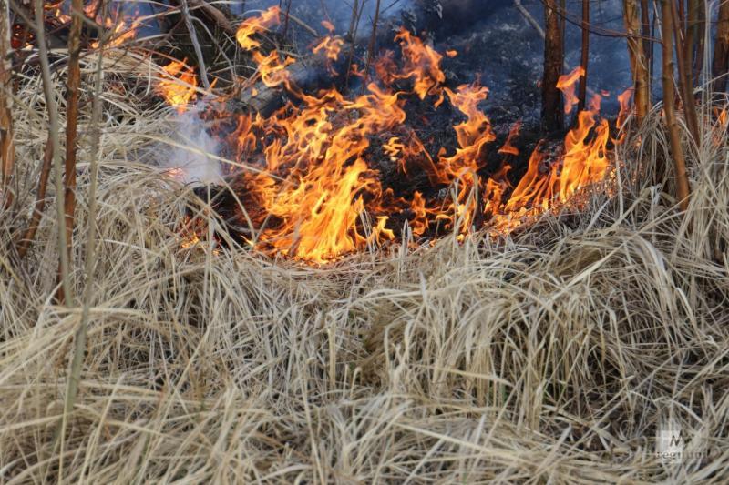 В 2020 году на территории ГКУ СО «Невьянское лесничество» было зарегистрировано девять лесных пожаров на площади 73,75 га. Причина большинства лесных пожаров —неосторожное обращение с огнем граждан